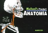 Melloni's Pocket Anatomía