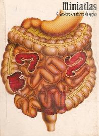 Miniatlas Gastroenterologia